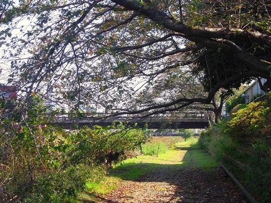 151019 今日の野川